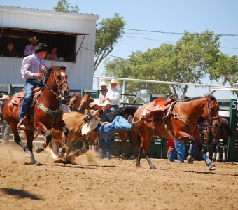 photo-gallery-kravig-Doggin-Linc Co Fair Rodeo (1)